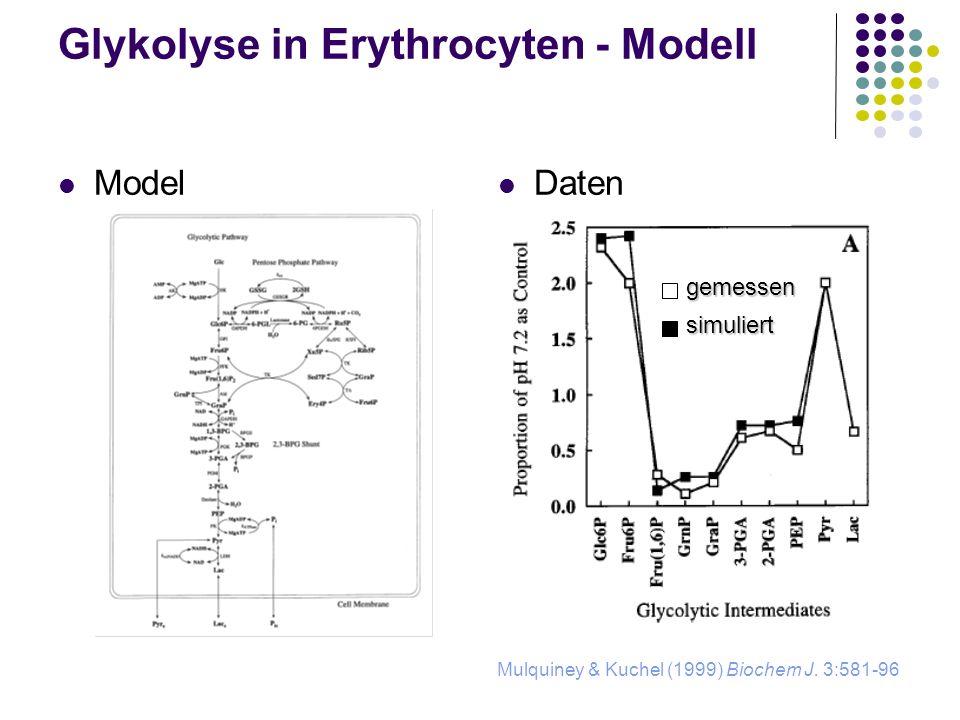 Glykolyse in Erythrocyten - Modell Daten Mulquiney & Kuchel (1999) Biochem J. 3:581-96 gemessen simuliert Model