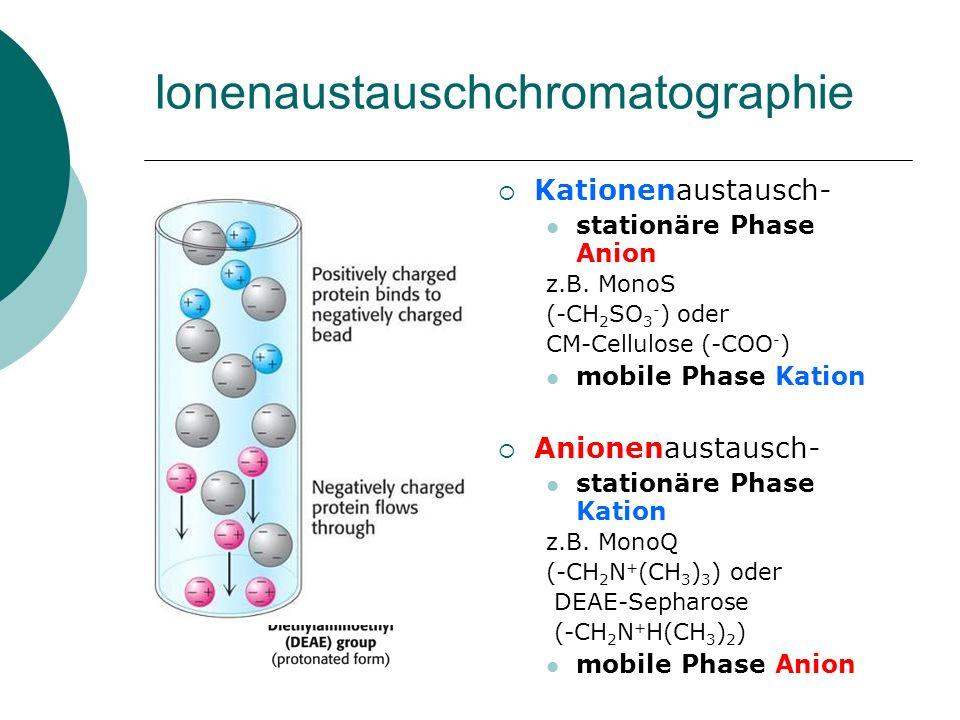 Gelfiltration oder Größenauschlußchromatographie