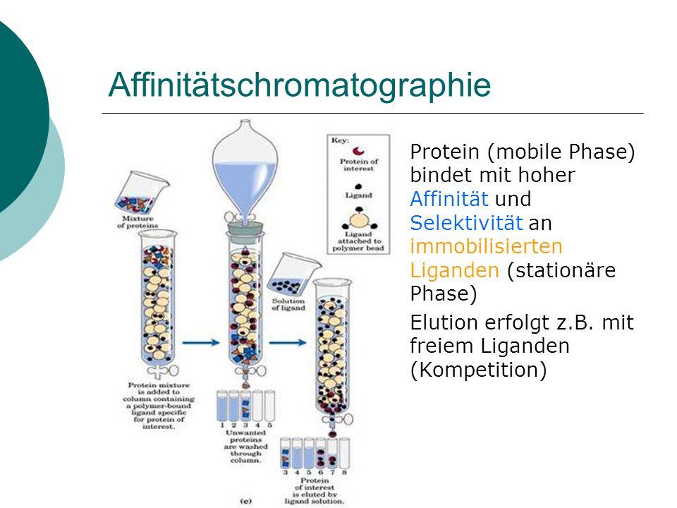 Affinitätschromatographie Affinitäts-tagMatrix AntigenAntikörper (immobiliert) 6His (His 6 -tag) Ni-NTA Strep-tag II (Peptid)Streptactin (Streptavidin- Derivat) Glutathion-S-TransferaseGlutathion-Sepharose Calmodulin-Bindungs-PeptidCalmodulin-Affinitätsmatrix Maltose-Bindungs-ProteinAmylose-Matrix