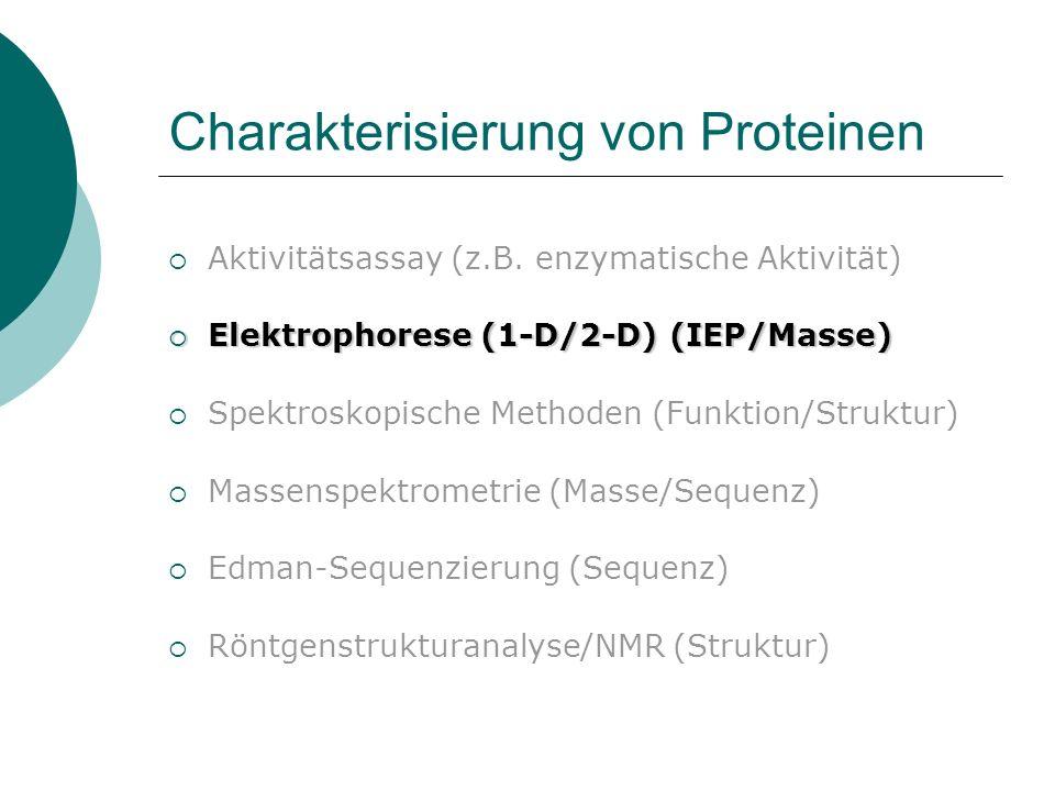 SDS-Polyacrylamid- Gelelektrophorese (SDS-PAGE)