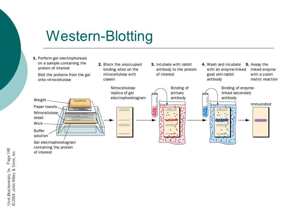 ESI-MS Elektrospray-Ionisations- Massenspektrometrie