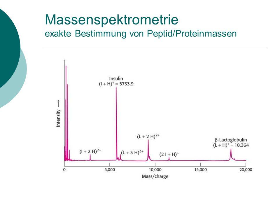 Identifizierung von Proteinen mit Hilfe der Massenspektrometrie SDS-Gel oder 2D-Gel Bande/Spot ausschneiden Tryptischer Verdau der Proteine Bestimmung der Peptidmassen Peptid-Fingerabdruck Datenbanksuche nach Proteinen mit identischem Peptid-Fingerabdruck
