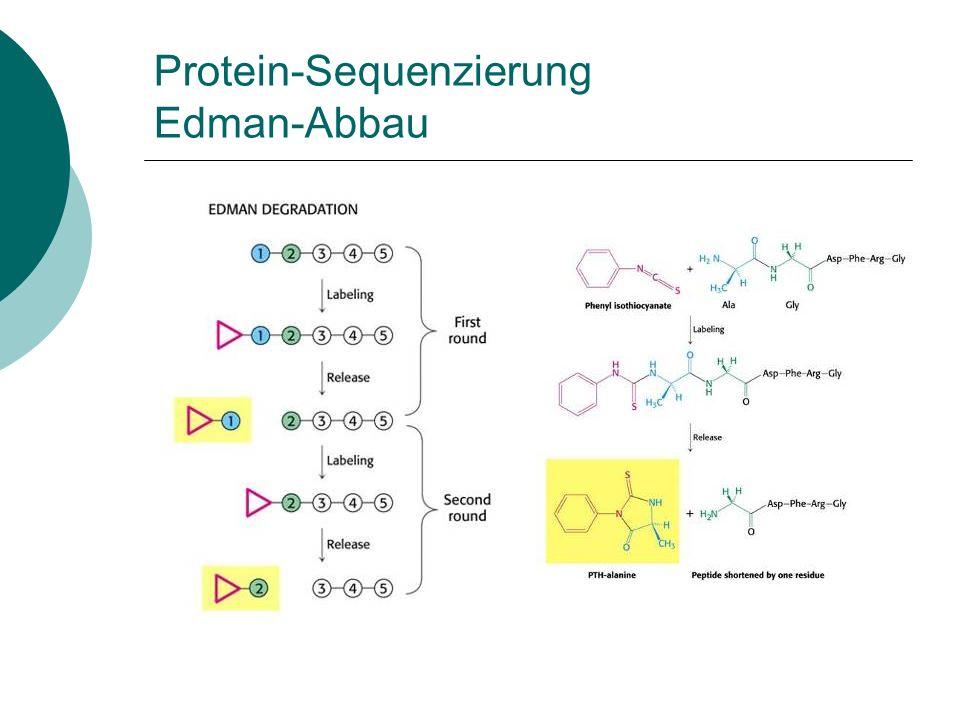 Protein-Sequenzierung Edman-Abbau