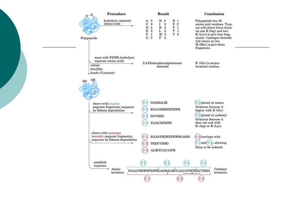 Affinitätschromatographie/ Elektrophorese Ziel des Versuchs Aufreinigung eines rekombinantes Proteins exprimiert in Escherichia coli über Affinitätschromatographie Verfolgung der Aufreinigung mittels Fluoreszenz Analyse der Aufreinigung mittels SDS- Gelelektrophorese Untersuchung zur Thermostabilität des Proteins aufgrund seiner Fluoreszenz im nativen Zustand