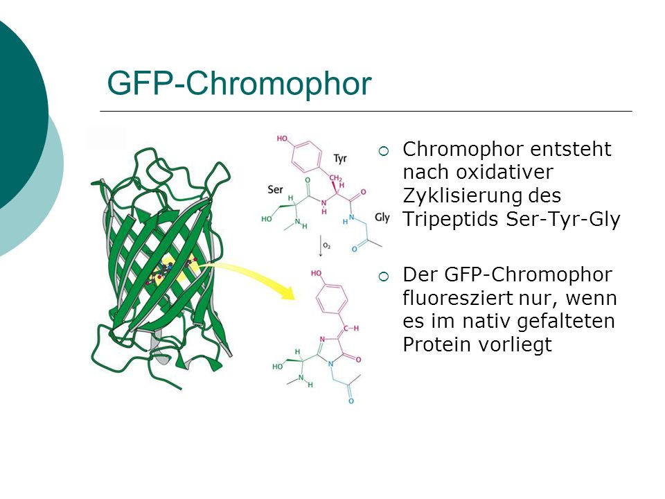 In vivo Fluoreszenz mittels GFP Page 119 Voet Biochemistry 3e © 2004 John Wiley & Sons, Inc.