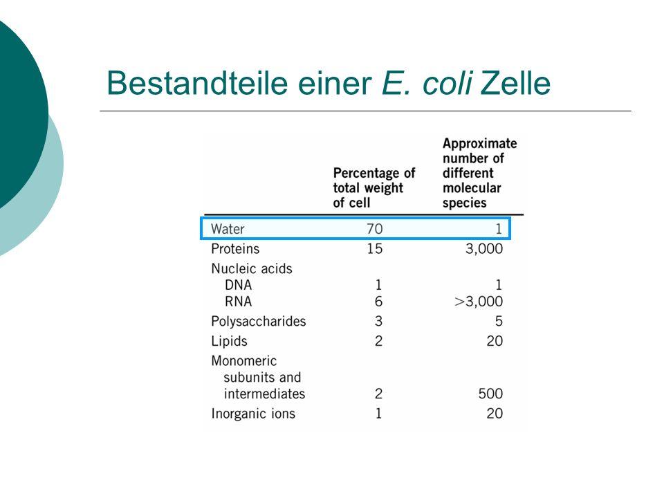 Bestandteile einer E. coli Zelle