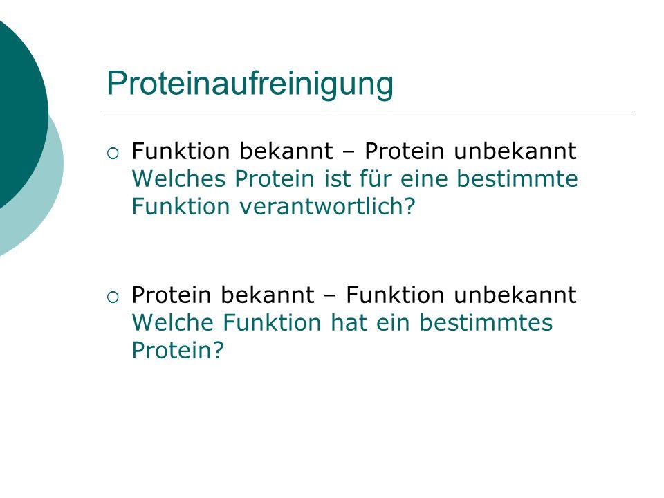 Aufreinigung von Proteinen Proteineigenschaften Stabilität Löslichkeit Ladung Hydrophobizität Größe/Form/Masse spezifische Interaktionen (Affinität) Verfahren Zellaufschluß Pufferbedingungen Zentrifugation Fällung Dialyse Säulenchromatographie