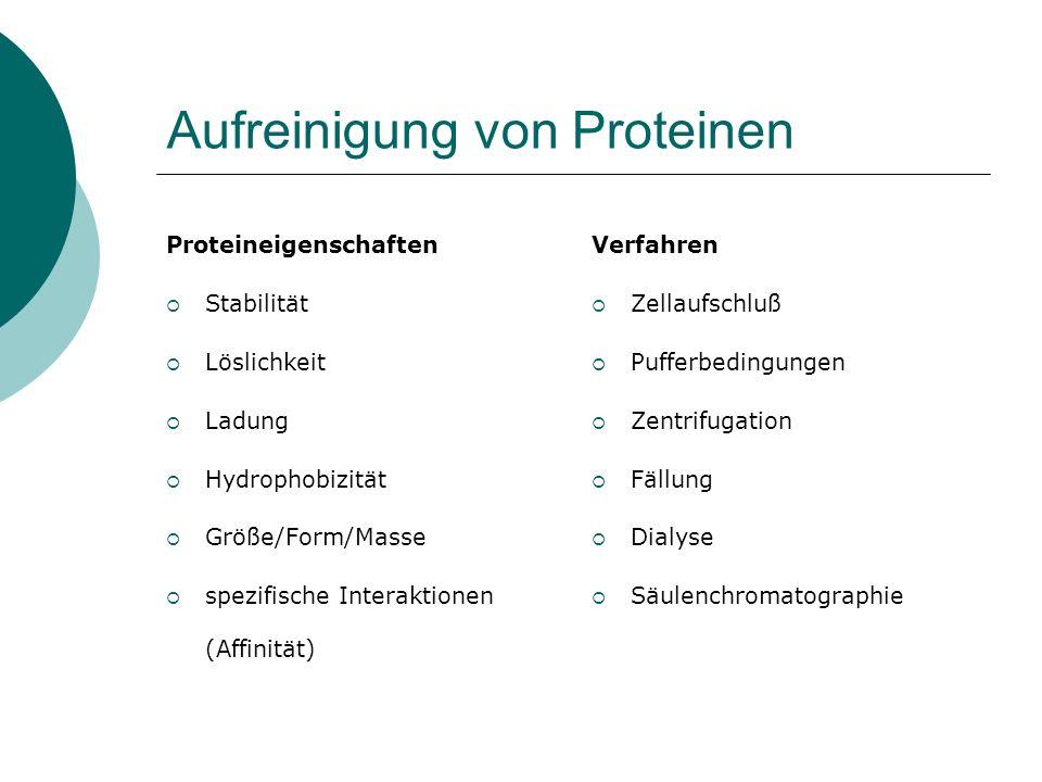 Charakterisierung von Proteinen Aktivitätsassay (z.B.