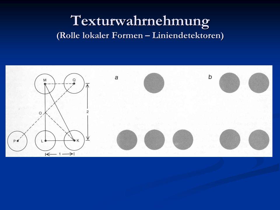 Texturwahrnehmung (Rolle lokaler Formen – Liniendetektoren)