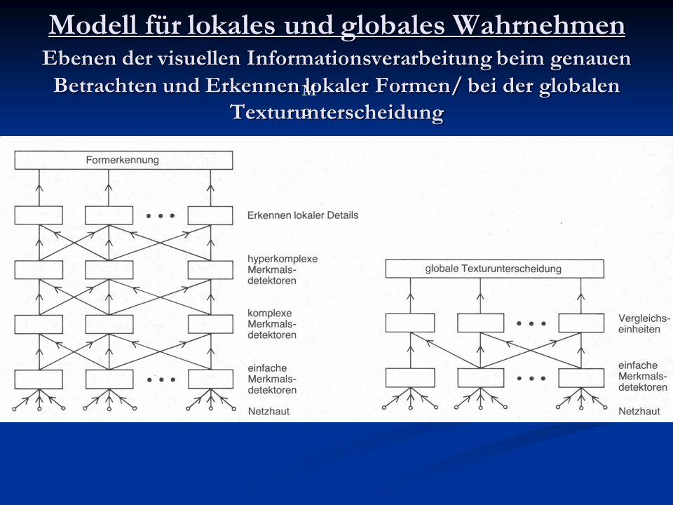 Modell für lokales und globales Wahrnehmen Ebenen der visuellen Informationsverarbeitung beim genauen Betrachten und Erkennen lokaler Formen/ bei der