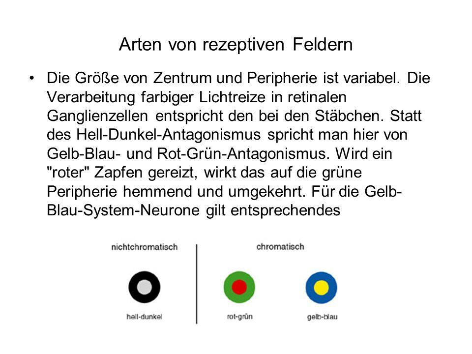 Arten von rezeptiven Feldern Die Größe von Zentrum und Peripherie ist variabel. Die Verarbeitung farbiger Lichtreize in retinalen Ganglienzellen entsp