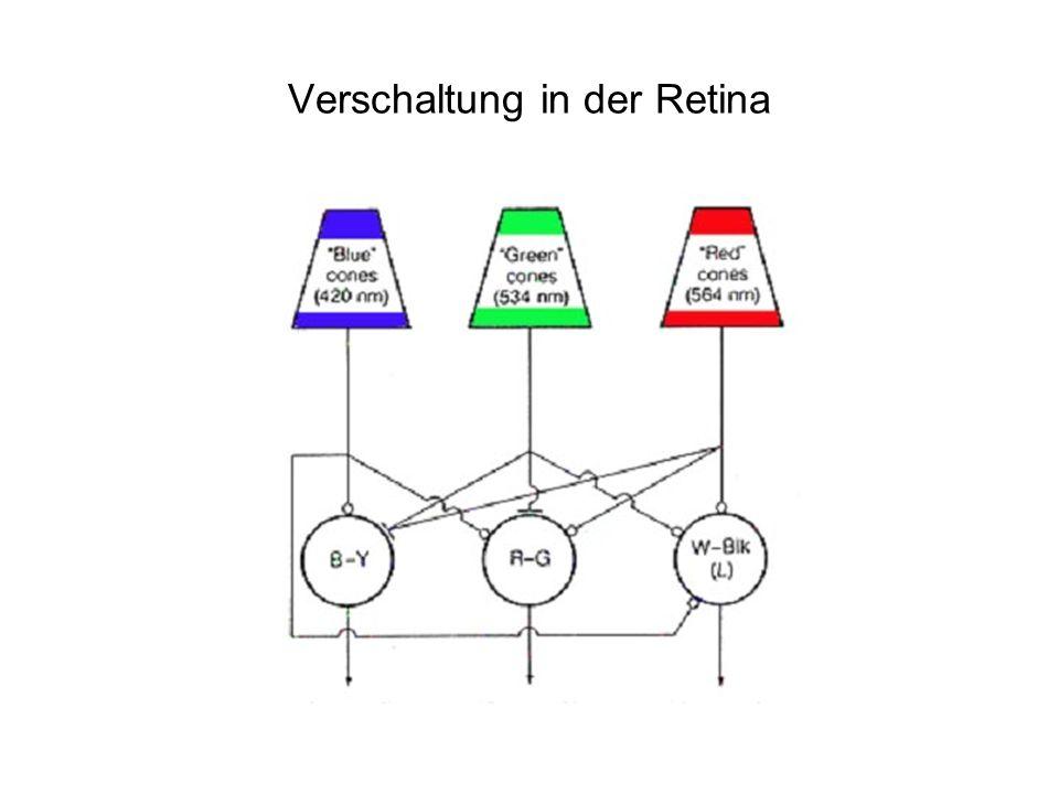 Verschaltung in der Retina