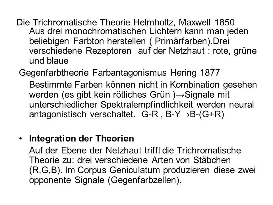 Die Trichromatische Theorie Helmholtz, Maxwell 1850 Aus drei monochromatischen Lichtern kann man jeden beliebigen Farbton herstellen ( Primärfarben).D