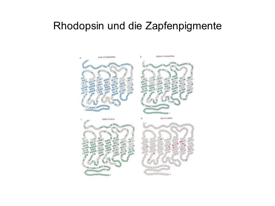 Farbenblindheit Rot-Grün Blindheit resessiv x-chromosomal Durch falsches crossing over verursacht