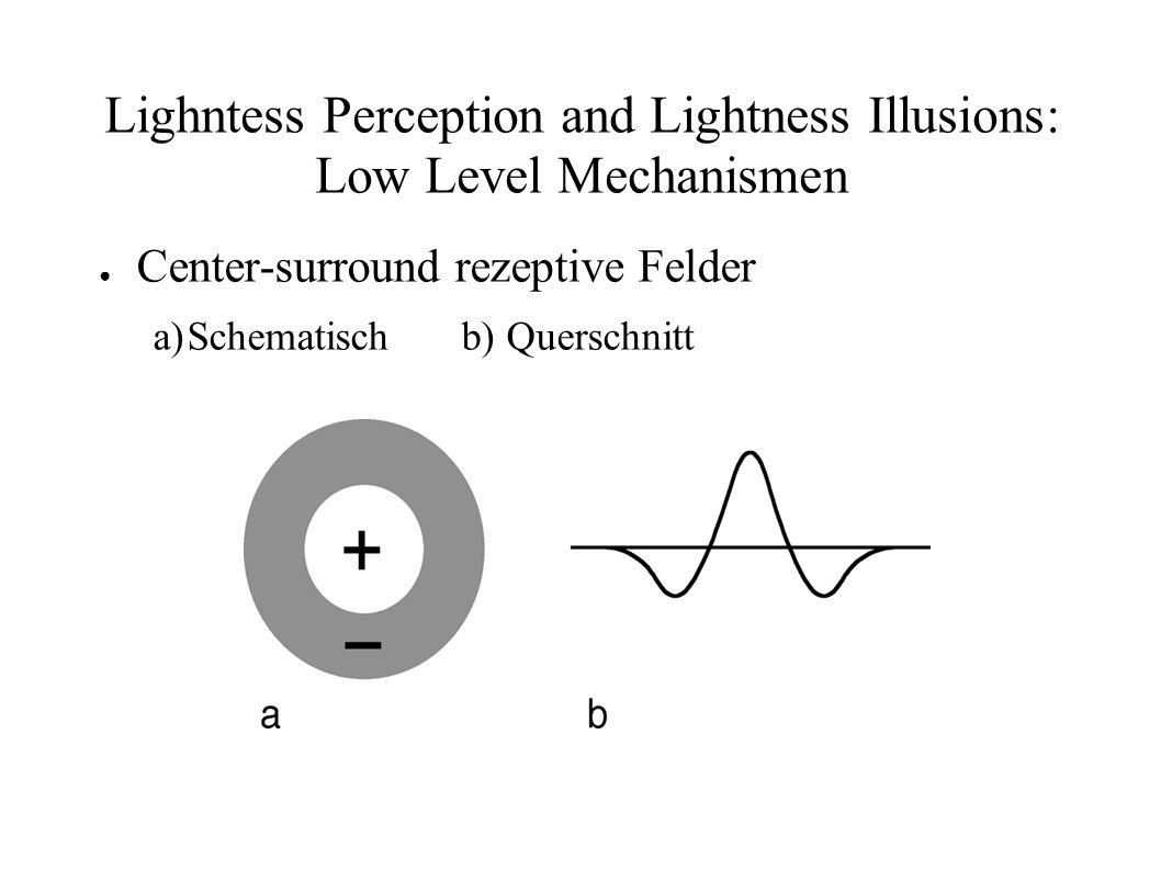 Lighntess Perception and Lightness Illusions: Low Level Mechanismen Center-surround rezeptive Felder a)Schematisch b) Querschnitt
