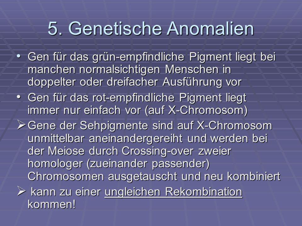 5. Genetische Anomalien Gen für das grün-empfindliche Pigment liegt bei manchen normalsichtigen Menschen in doppelter oder dreifacher Ausführung vor G