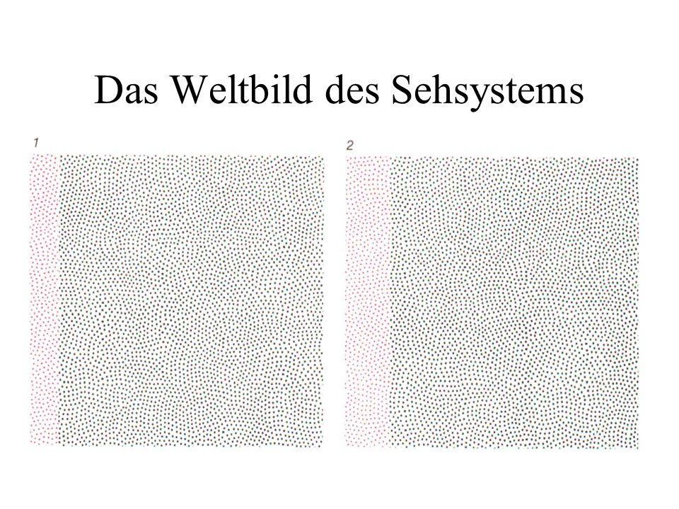 Das Weltbild des Sehsystems