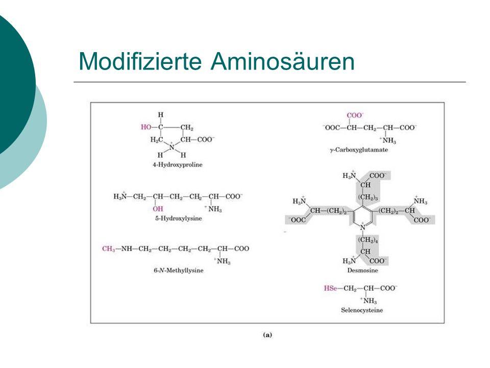 Negativ geladene Seitenketten (Saure Aminosäuren)