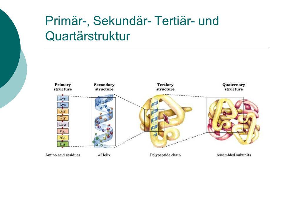 Struktur von Proteinen Übersicht über die Proteinstruktur Sekundärstruktur von Proteinen Tertiär- und Quartärstruktur von Proteinen Denaturierung und