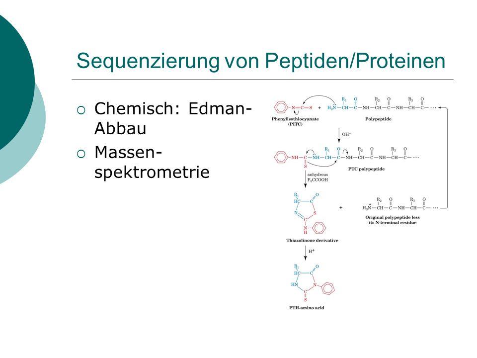 Peptidbindung Bildung der Peptidbindung am Ribosom über aktivierte Vorstufen (Aminoacyl-tRNA) Hydrolyse der Peptidbindung durch Proteasen (z.B. Trypsi