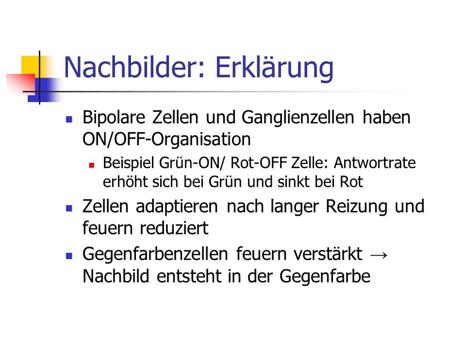 Nachbilder: Erklärung Bipolare Zellen und Ganglienzellen haben ON/OFF-Organisation Beispiel Grün-ON/ Rot-OFF Zelle: Antwortrate erhöht sich bei Grün u