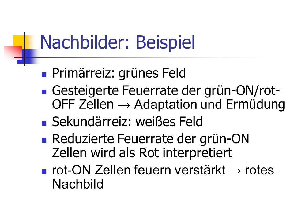 Nachbilder: Beispiel Primärreiz: grünes Feld Gesteigerte Feuerrate der grün-ON/rot- OFF Zellen Adaptation und Ermüdung Sekundärreiz: weißes Feld Reduz