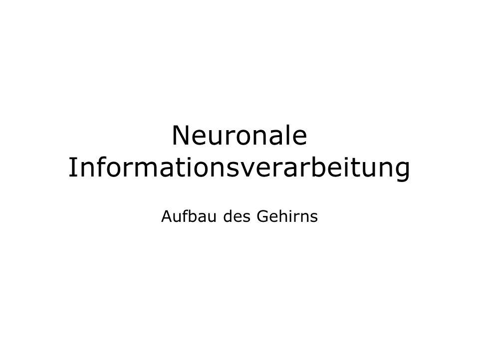 Neuronale Informationsverarbeitung Aufbau des Gehirns
