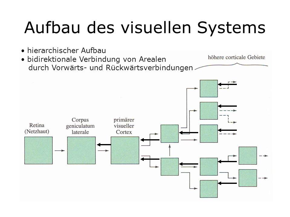 Aufbau des visuellen Systems hierarchischer Aufbau bidirektionale Verbindung von Arealen durch Vorwärts- und Rückwärtsverbindungen