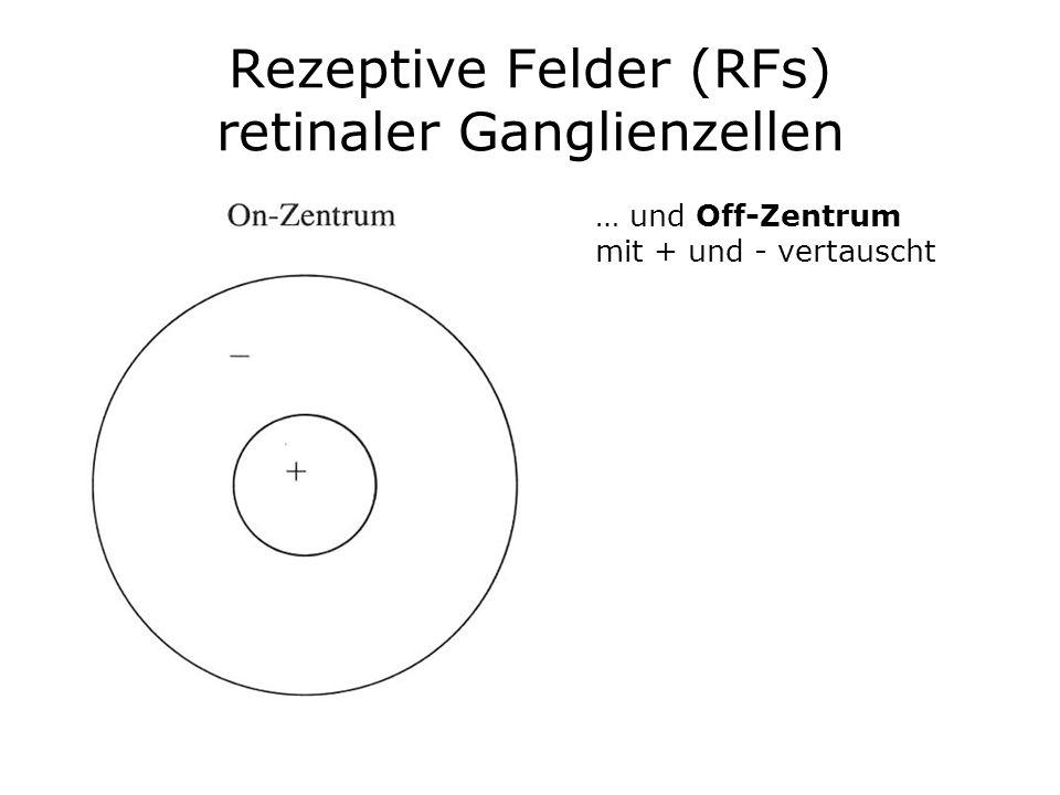 Rezeptive Felder (RFs) retinaler Ganglienzellen … und Off-Zentrum mit + und - vertauscht