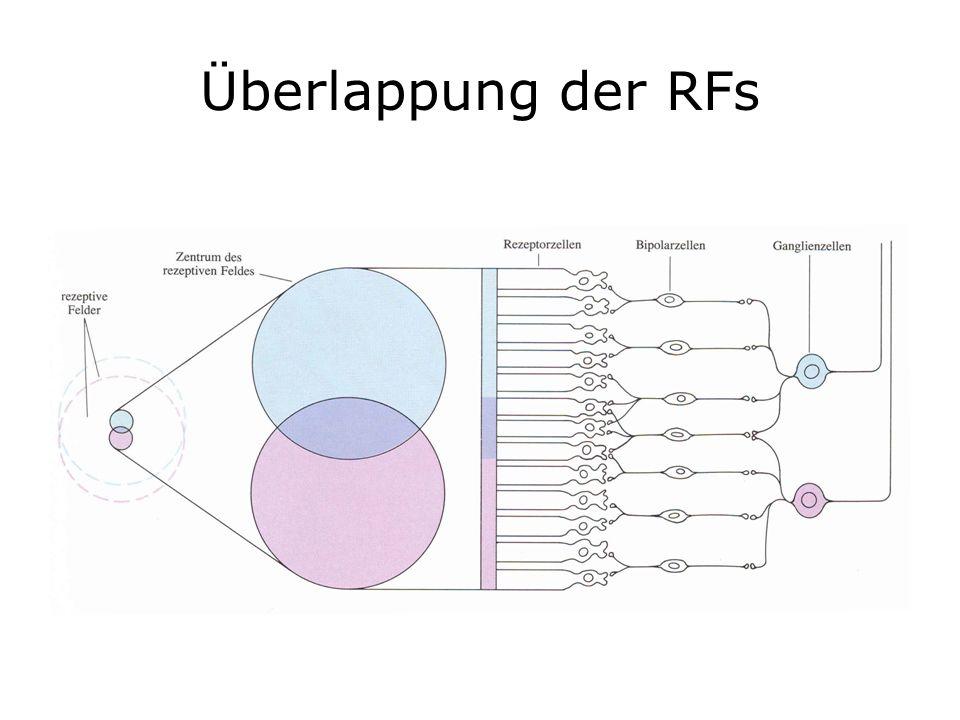 Überlappung der RFs