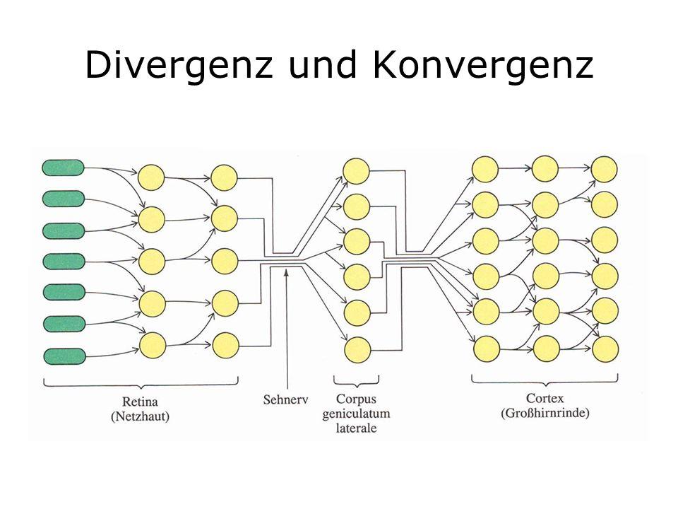 Divergenz und Konvergenz