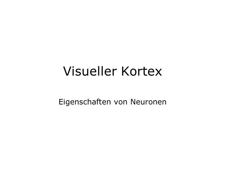 Visueller Kortex Eigenschaften von Neuronen