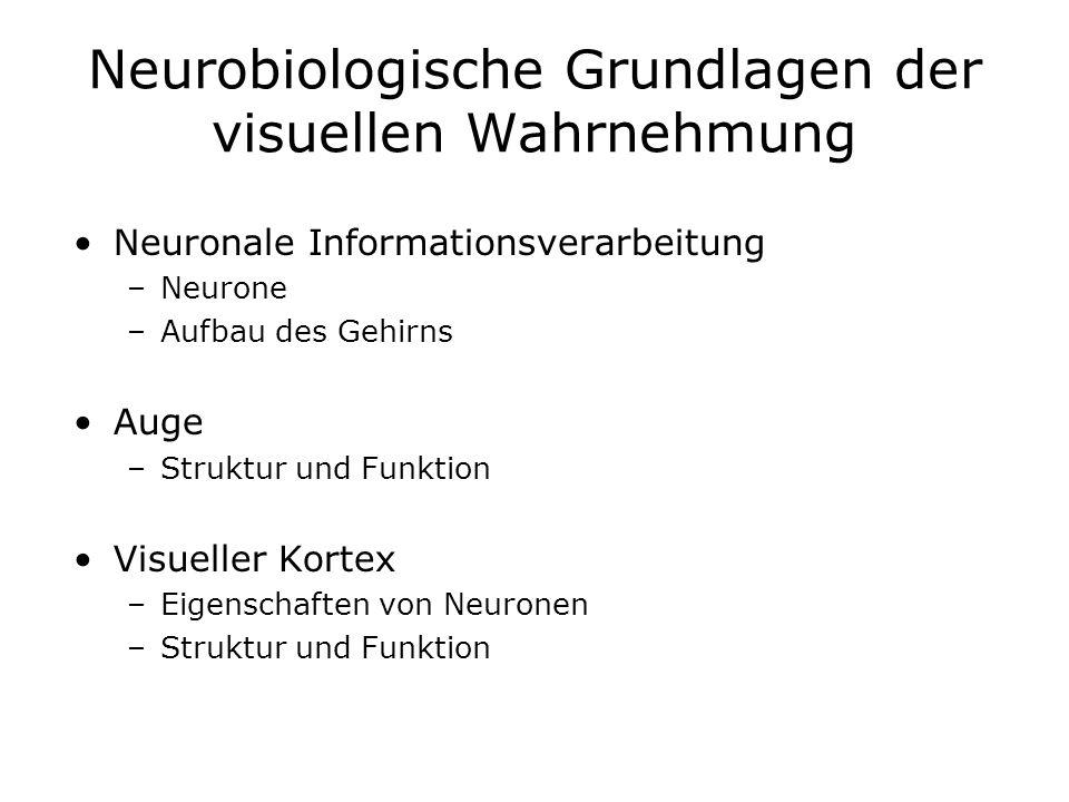 Neurobiologische Grundlagen der visuellen Wahrnehmung Neuronale Informationsverarbeitung –Neurone –Aufbau des Gehirns Auge –Struktur und Funktion Visu