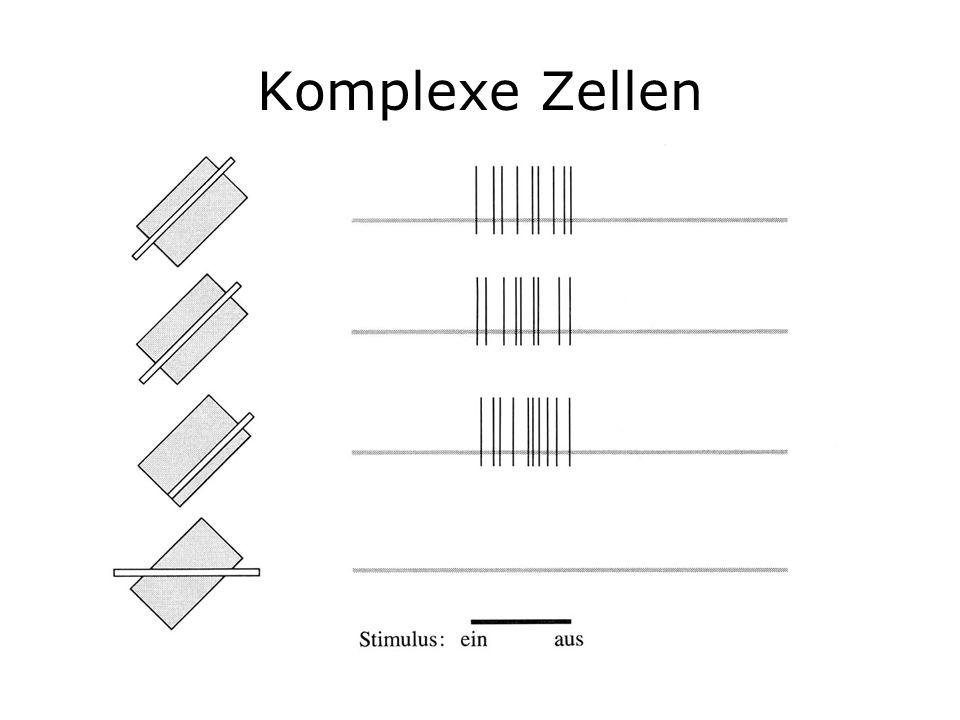 Komplexe Zellen