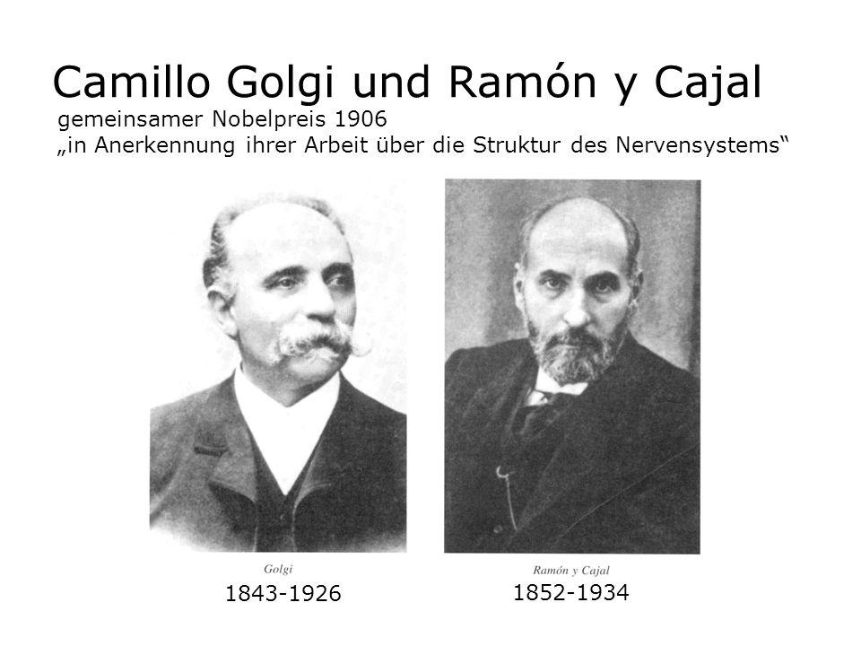 Camillo Golgi und Ramón y Cajal 1843-1926 gemeinsamer Nobelpreis 1906 in Anerkennung ihrer Arbeit über die Struktur des Nervensystems 1852-1934