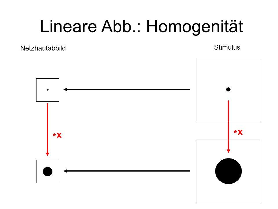 Lineare Abb.: Homogenität Netzhautabbild Stimulus x * x *