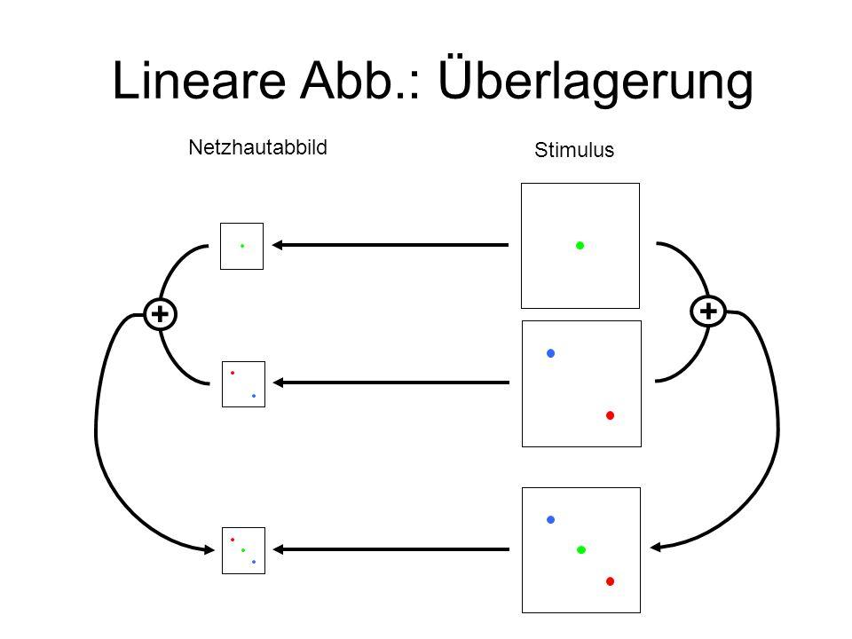 Lineare Abb.: Überlagerung Netzhautabbild Stimulus ++