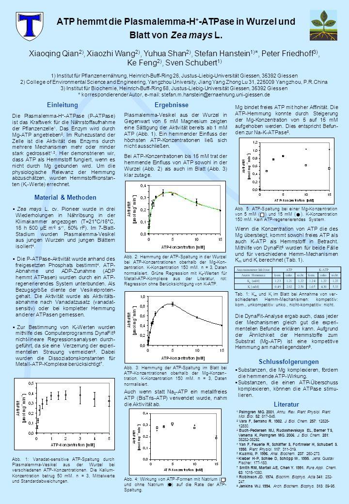 Abb. 5: ATP-Spaltung bei einer Mg-Konzentration von 5 mM ( ) und 15 mM ( ). K-Konzentration 150 mM. Kein ATP-regenerierendes System. Literatur 1 Palmg