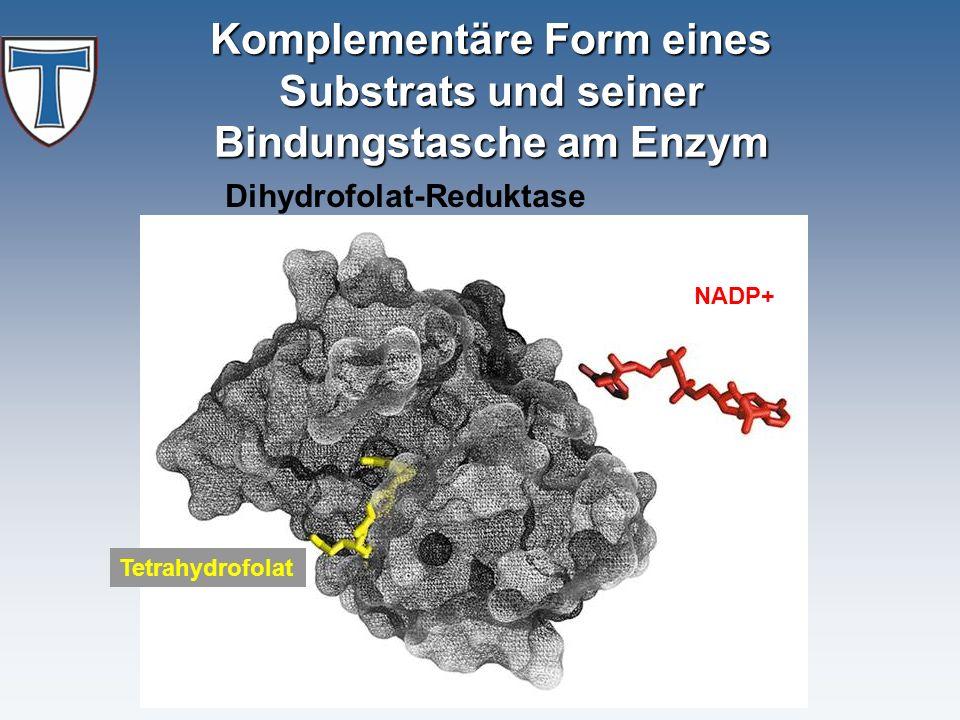 Komplementäre Form eines Substrats und seiner Bindungstasche am Enzym NADP+ Tetrahydrofolat Dihydrofolat-Reduktase