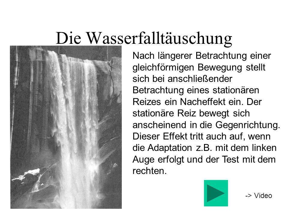 Die Wasserfalltäuschung Nach längerer Betrachtung einer gleichförmigen Bewegung stellt sich bei anschließender Betrachtung eines stationären Reizes ei