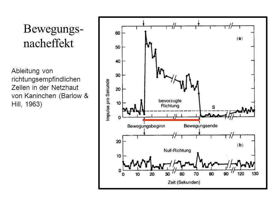 Bewegungs- nacheffekt Ableitung von richtungsempfindlichen Zellen in der Netzhaut von Kaninchen (Barlow & Hill, 1963)