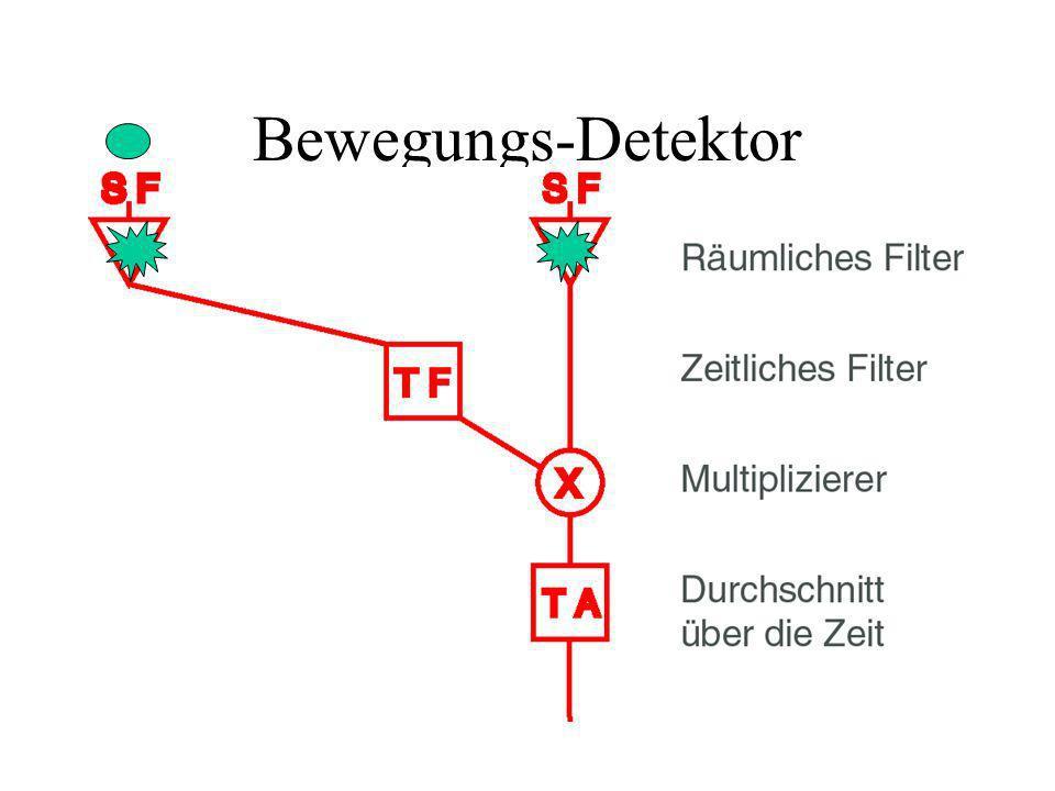 Bewegungs-Detektor