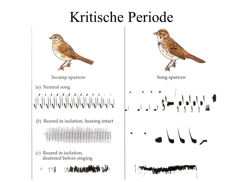 Unterschiedliche Sprachen machen unterschiedliche Regionen des akustischen Raumes unterscheidend F3 F2 F3 F2