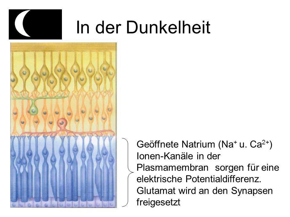 In der Dunkelheit Geöffnete Natrium (Na + u.