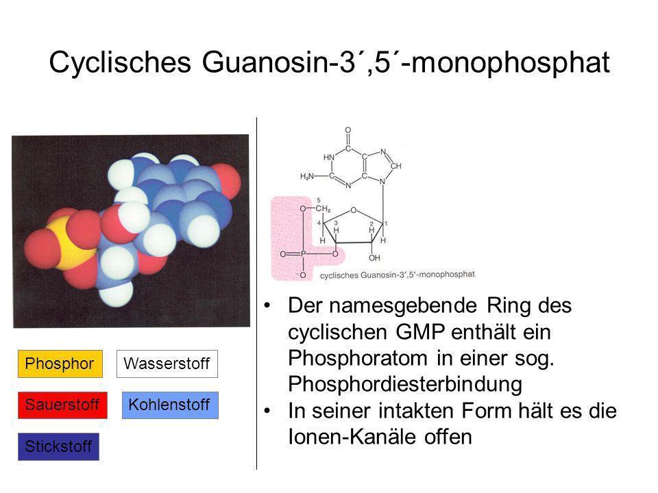 Cyclisches Guanosin-3´,5´-monophosphat Kohlenstoff Stickstoff Wasserstoff Sauerstoff Phosphor Der namesgebende Ring des cyclischen GMP enthält ein Phosphoratom in einer sog.