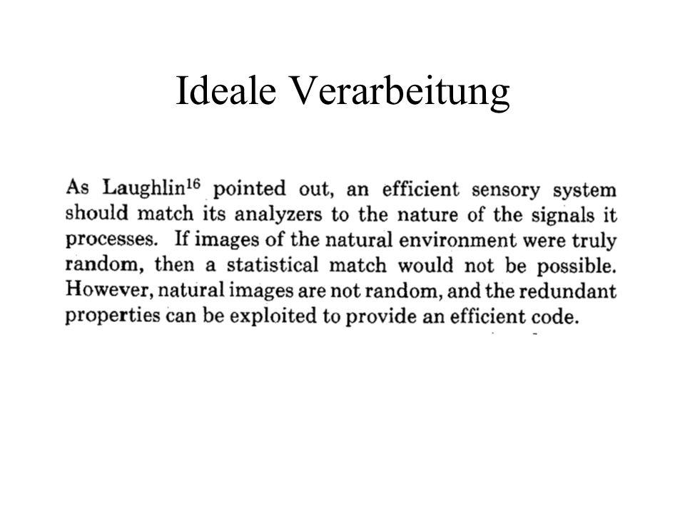 Verarbeitungsgeschwindigkeit Das Experiment von Thorpe, Fize & Marlot (Nature, 1996) zeigt, dass Wahrnehmungsprozesse mit rasend hoher Geschwindigkeit ablaufen In V1 werden Kanten extrahiert, ca.