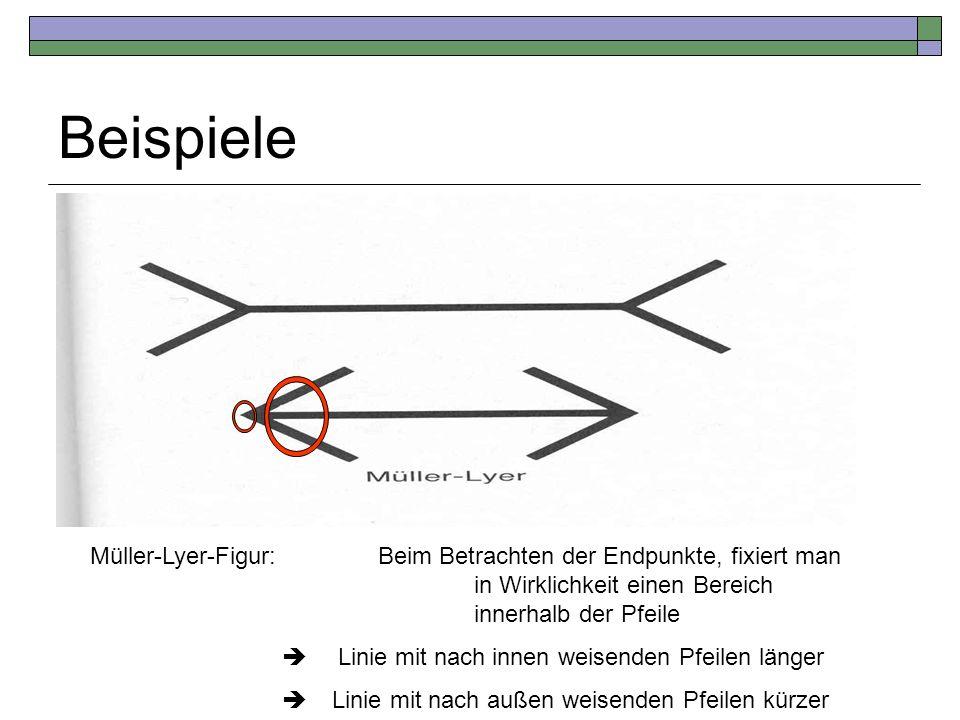 Beispiele Müller-Lyer-Figur:Beim Betrachten der Endpunkte, fixiert man in Wirklichkeit einen Bereich innerhalb der Pfeile Linie mit nach innen weisend
