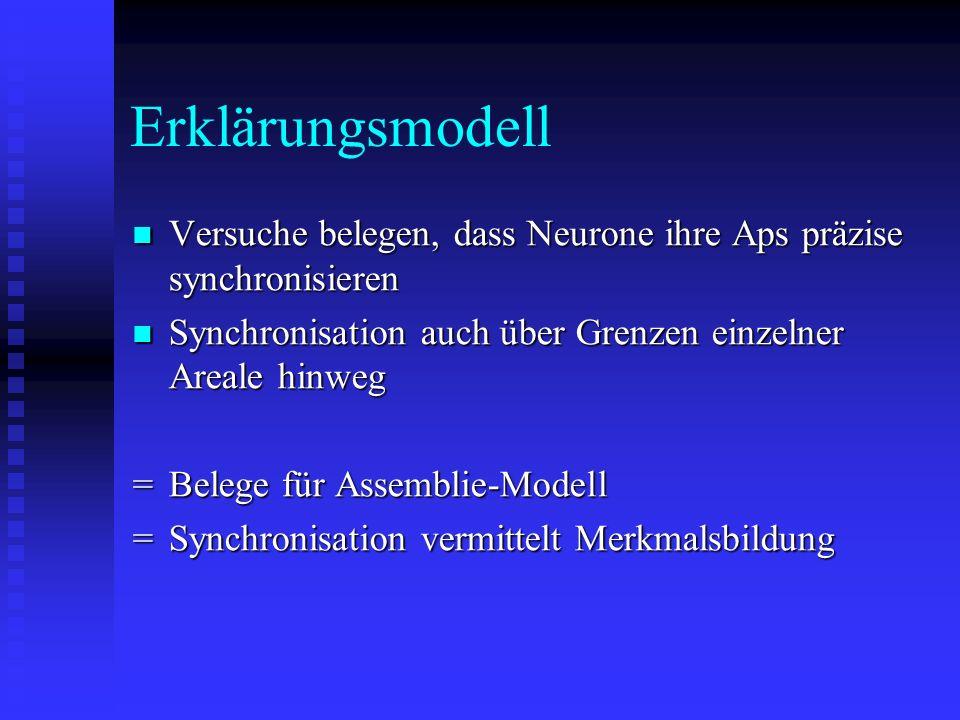 Erklärungsmodell Versuche belegen, dass Neurone ihre Aps präzise synchronisieren Versuche belegen, dass Neurone ihre Aps präzise synchronisieren Synch