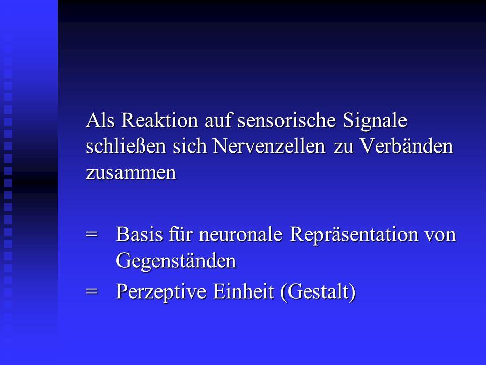 Als Reaktion auf sensorische Signale schließen sich Nervenzellen zu Verbänden zusammen = Basis für neuronale Repräsentation von Gegenständen =Perzepti