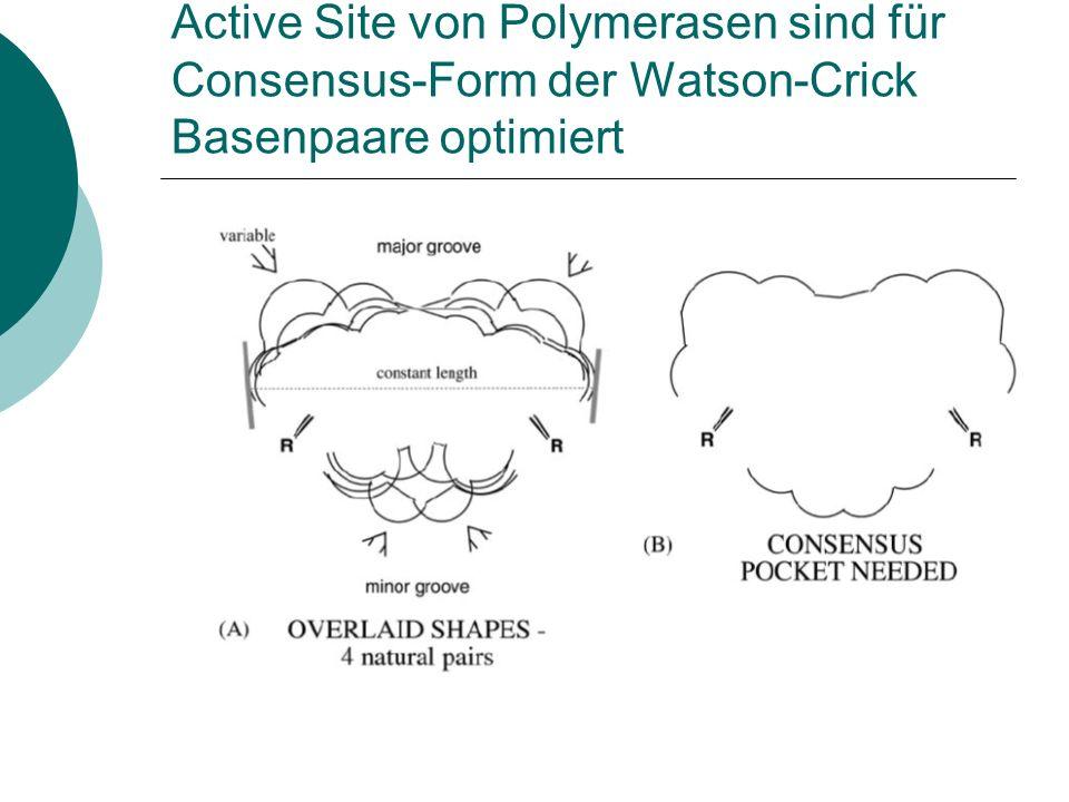 Active Site von Polymerasen sind für Consensus-Form der Watson-Crick Basenpaare optimiert